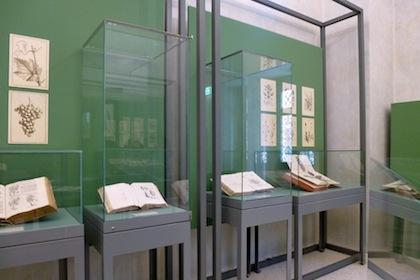 antichi-erbari-della-biblioteca-5