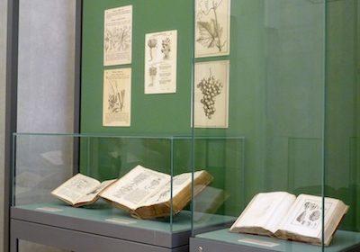 Antichi erbari della Biblioteca di Trento