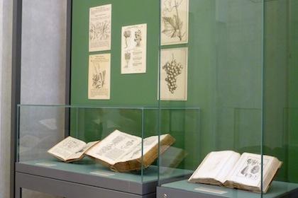 antichi-erbari-della-biblioteca-7
